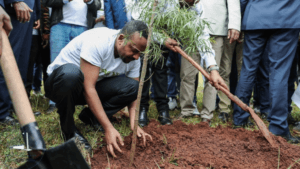 Etiopía planta 353 millones de árboles