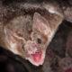 coronavirus en murciélagos
