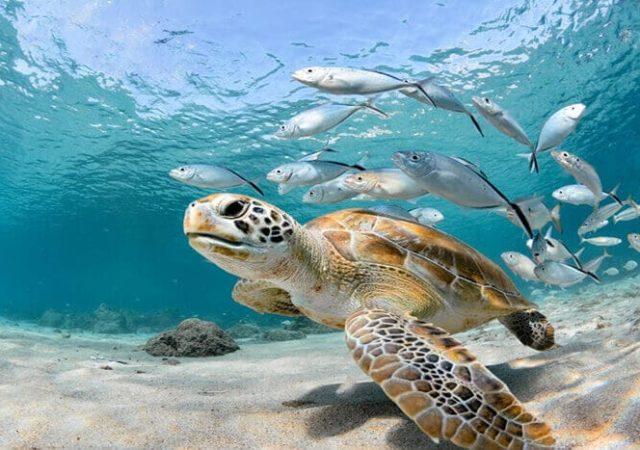 que es la conservación marina