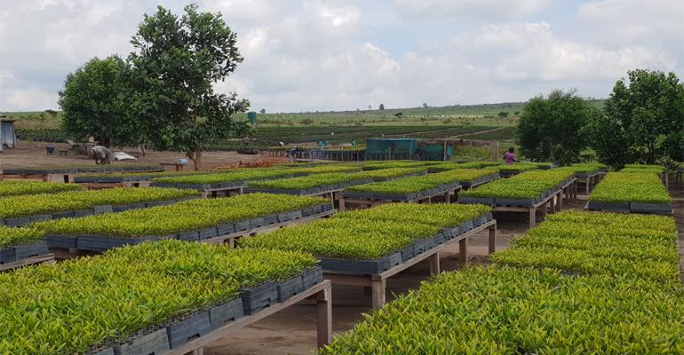 El Congo va a plantar un bosque de 40000 ha