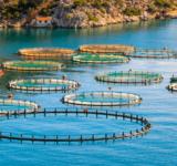 piscicultura sostenible