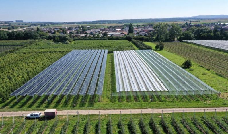Primera instalación de investigación agrivoltaica
